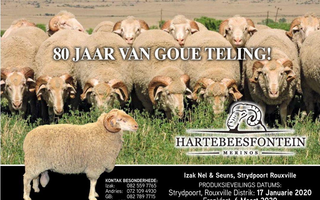 Hartebeesfontein Merino Auction – 17 Jan 2020