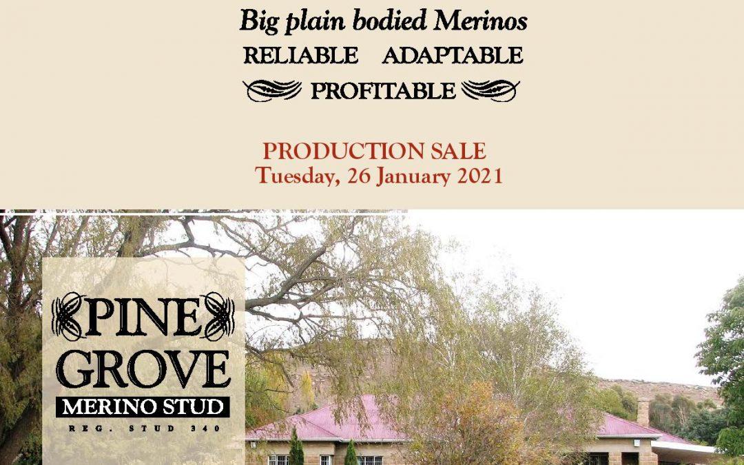 Pine Grove Merino Auction – 26 January 2021